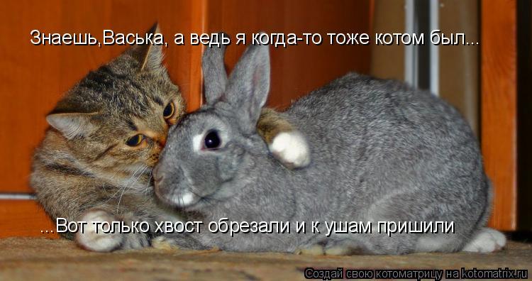 Котоматрица: Знаешь,Васька, а ведь я когда-то тоже котом был... ...Вот только хвост обрезали и к ушам пришили