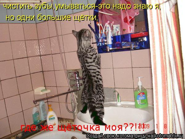 Котоматрица: чистить зубы,умываться-это надо знаю я, но одни большие щётки, где же щёточка моя??!!!