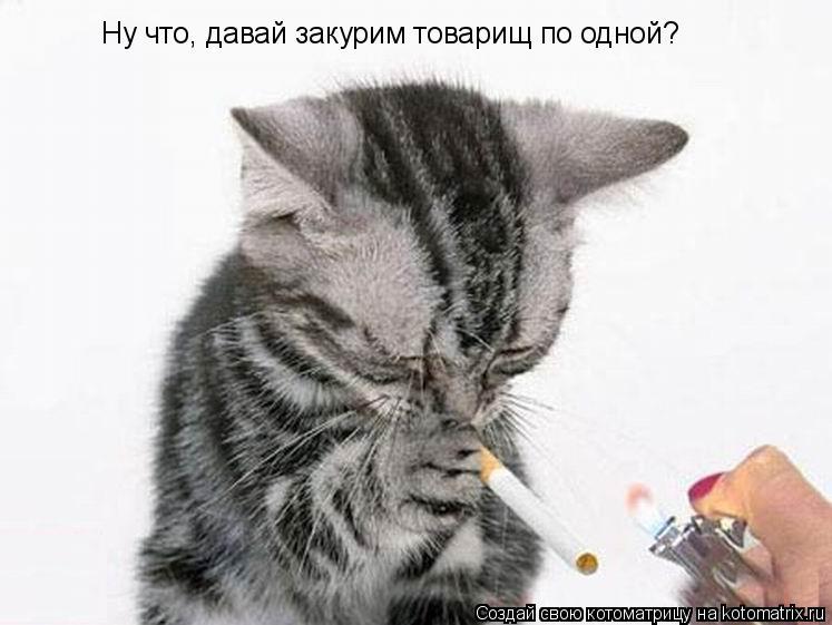 Котоматрица: Ну что, давай закурим товарищ по одной?