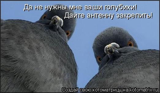 Котоматрица: Да не нужны мне ваши голубихи! Дайте антенну закрепить!
