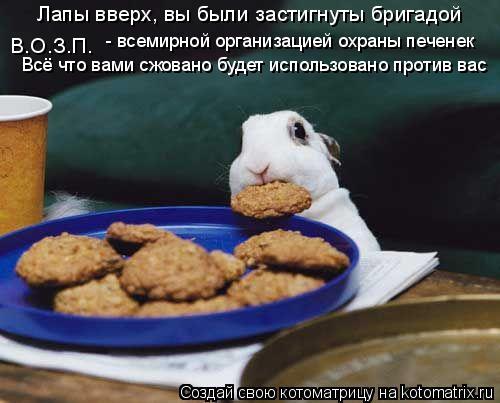 Котоматрица: Лапы вверх, вы были застигнуты бригадой В.О.З.П. - всемирной организацией охраны печенек Всё что вами сжовано будет использовано против вас