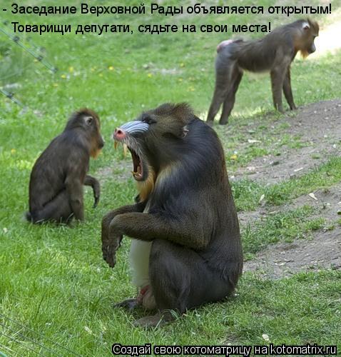 Котоматрица: - Заседание Верховной Рады объявляется открытым! Товарищи депутати, сядьте на свои места!