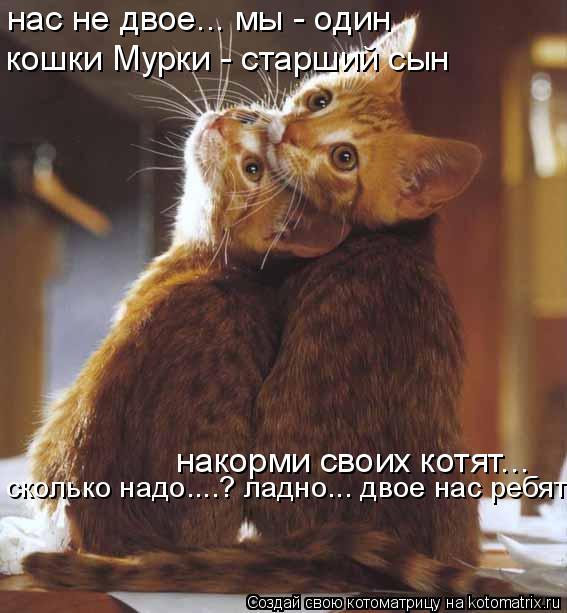 Котоматрица: нас не двое... мы - один кошки Мурки - старший сын накорми своих котят... сколько надо....? ладно... двое нас ребят