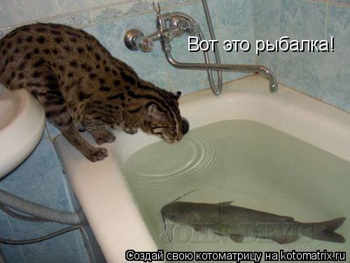 Котоматрица: Вот это рыбалка!