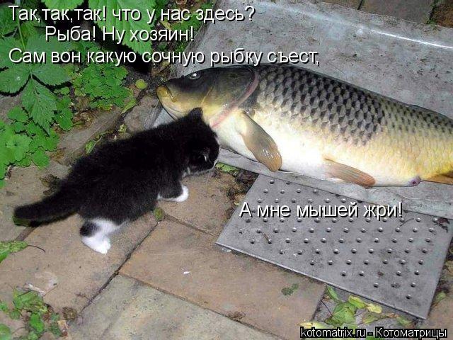 Котоматрица: Так,так,так! что у нас здесь? Рыба! Ну хозяин! Сам вон какую сочную рыбку съест, А мне мышей жри!