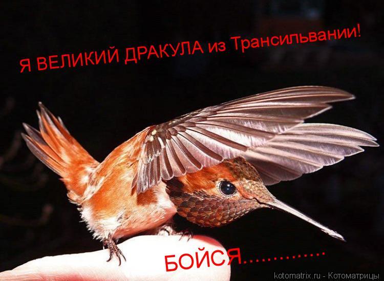 Котоматрица: Я ВЕЛИКИЙ ДРАКУЛА из Трансильвании! БОЙСЯ..............