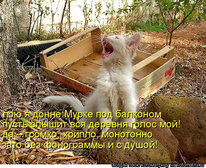 Котоматрица: пою я донне Мурке под балконом пусть слышит вся деревня голос мой! да – громко, хрипло, монотонно зато без фонограммы и с душой!