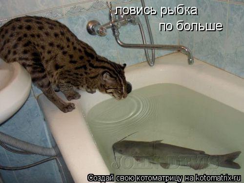 Котоматрица: ловись рыбка по больше