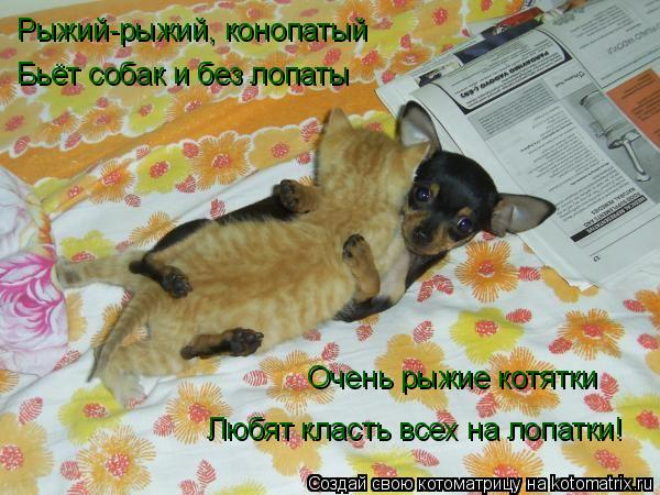 Котоматрица: Рыжий-рыжий, конопатый Бьёт собак и без лопаты Очень рыжие котятки Любят класть всех на лопатки!