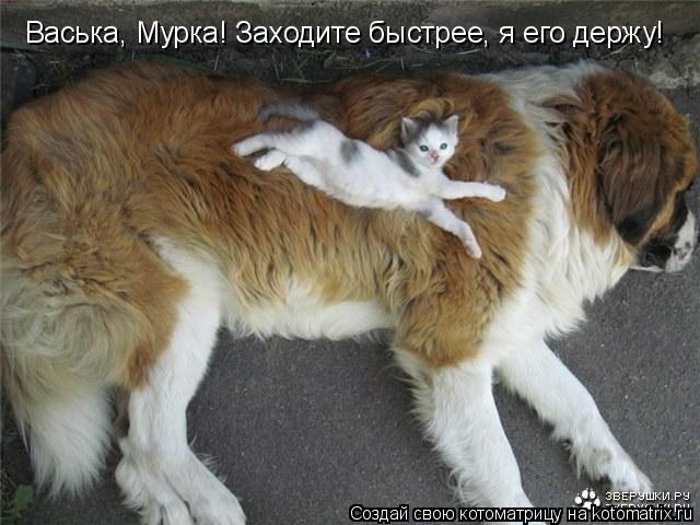 Котоматрица: Васька, Мурка! Заходите быстрее, я его держу!