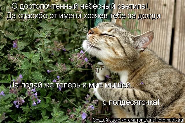 Котоматрица: О достопочтенный небесный светила!, Да спасибо от имени хозяев тебе за дожди Да подай же теперь и мне мышей...  с полдесяточка!