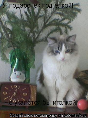 Котоматрица: Я подарочек под елкой! Не укалотся бы иголкой!