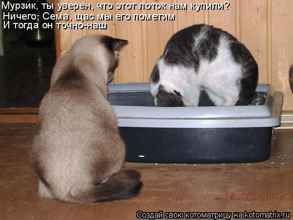 Котоматрица: Ничего, Сема, щас мы его пометим И тогда он точно-наш Мурзик, ты уверен, что этот лоток нам купили?