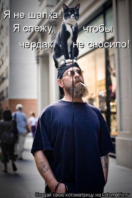 Котоматрица: Я не шапка! Я слежу, чтобы чердак       не сносило!