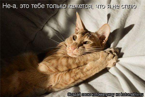 Котоматрица: Не-а, это тебе только кажется, что я не сплю