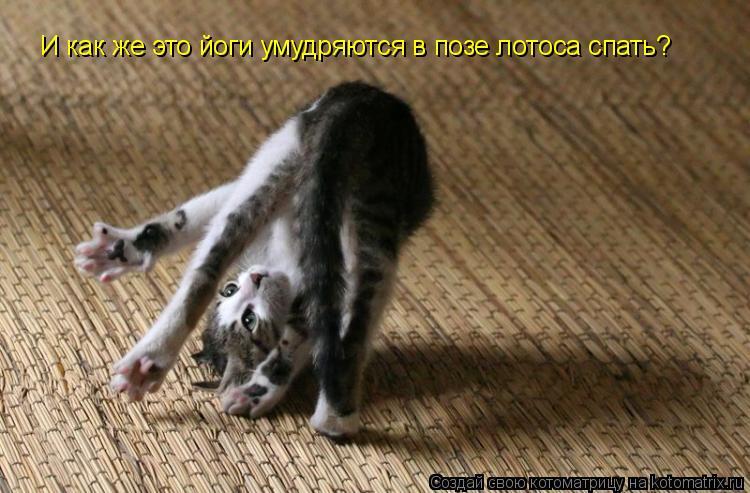 Котоматрица: И как же это йоги умудряются в позе лотоса спать?