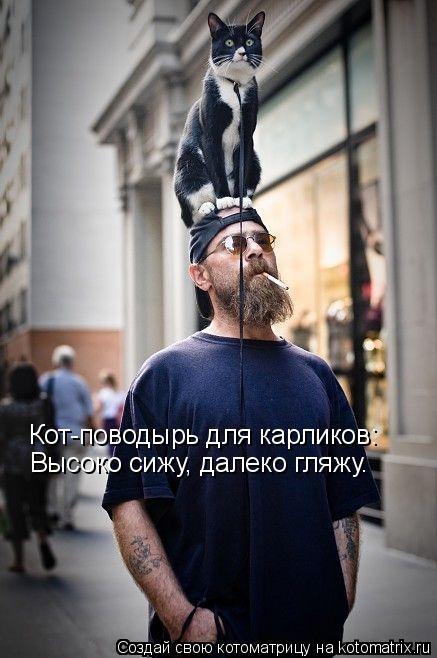 Котоматрица: Кот-поводырь для карликов: Высоко сижу, далеко гляжу.