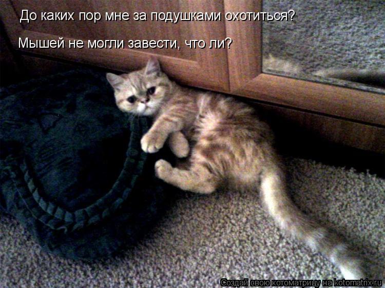 Котоматрица: До каких пор мне за подушками охотиться? До каких пор мне за подушками охотиться? Мышей не могли завести, что ли?