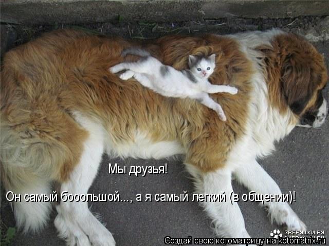 Котоматрица: Мы друзья!  Он самый бооольшой..., а я самый легкий (в общении)!