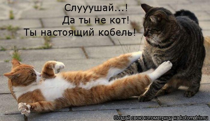 Котоматрица: Слууушай...! Да ты не кот! Ты настоящий кобель!