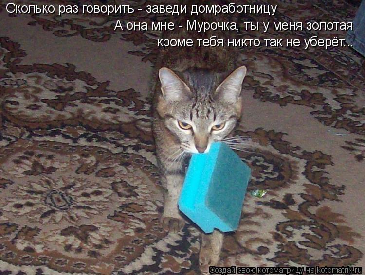 Котоматрица: Сколько раз говорить - заведи домработницу А она мне - Мурочка, ты у меня золотая кроме тебя никто так не уберёт...