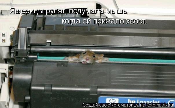 Котоматрица: Ящерицы рулят, подумала мышь, когда ей прижало хвост.