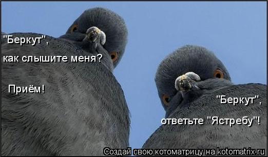 """Котоматрица: как слышите меня? Приём! """"Беркут"""", """"Беркут"""", ответьте """"Ястребу""""!"""