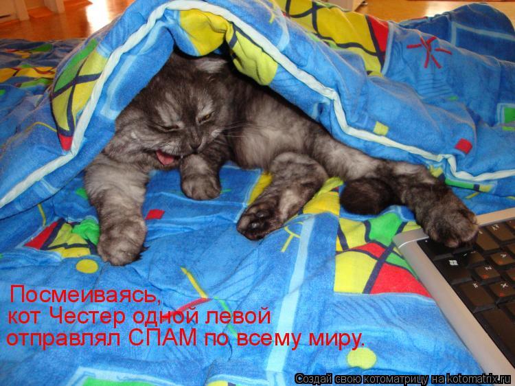 Котоматрица: Посмеиваясь,  кот Честер одной левой  отправлял СПАМ по всему миру.