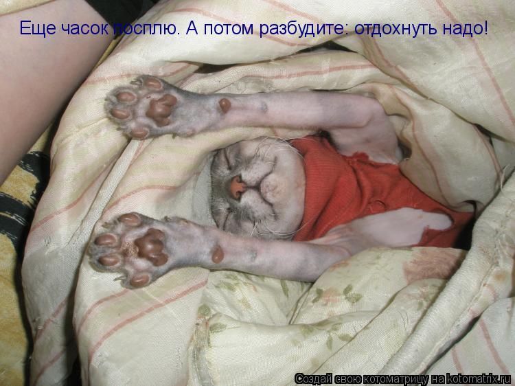 Котоматрица: Еще часок посплю. А потом разбудите: отдохнуть надо!
