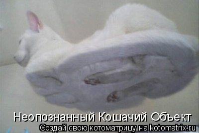 Котоматрица: Неопознанный Кошачий Объект