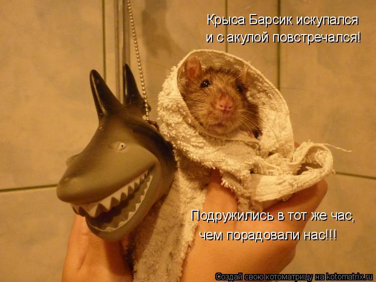 Котоматрица: Крыса Барсик искупался и с акулой повстречался! Подружились в тот же час , чем порадовали нас!!!