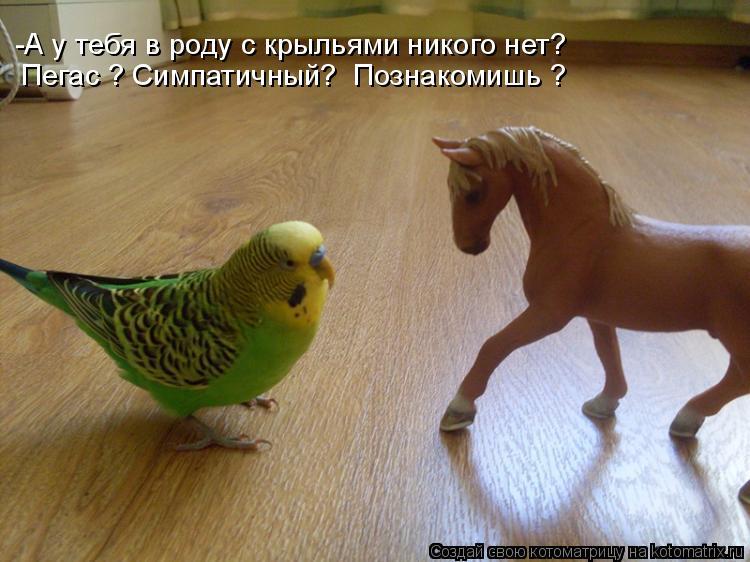 Котоматрица: -А у тебя в роду с крыльями никого нет? Пегас ? Симпатичный?  Познакомишь ?