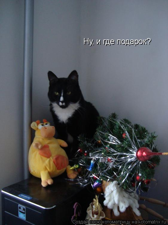 Котоматрица: Ну, и где подарок?