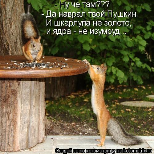 Котоматрица: - Ну че там??? - Да наврал твой Пушкин. И шкарлупа не золото, и ядра - не изумруд...