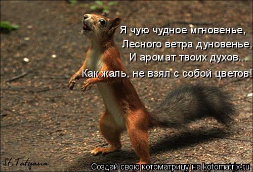 Котоматрица: Я чую чудное мгновенье, Лесного ветра дуновенье, И аромат твоих духов... Как жаль, не взял с собой цветов!