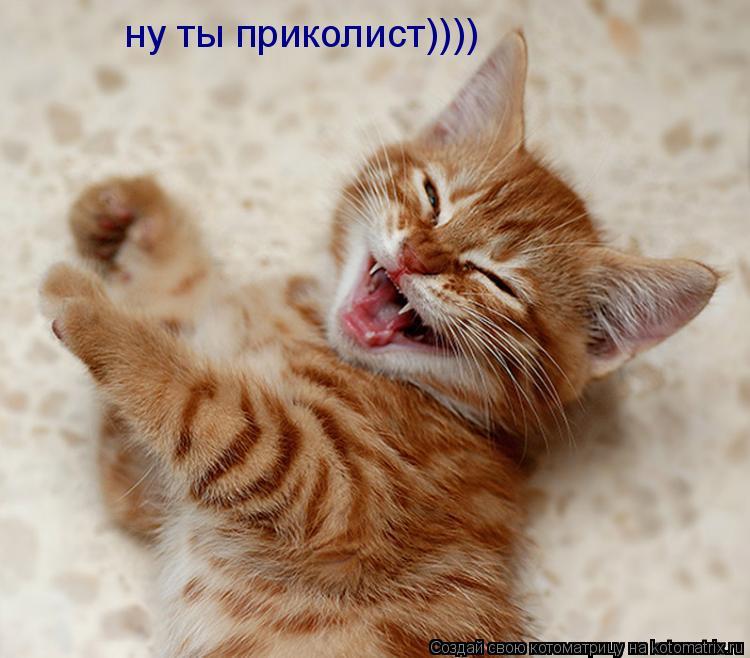 Котоматрица: ну ты приколист))))