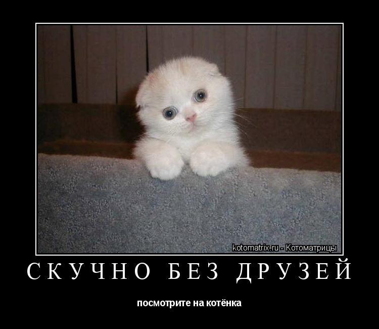 Котоматрица: скучно без друзей посмотрите на котёнка
