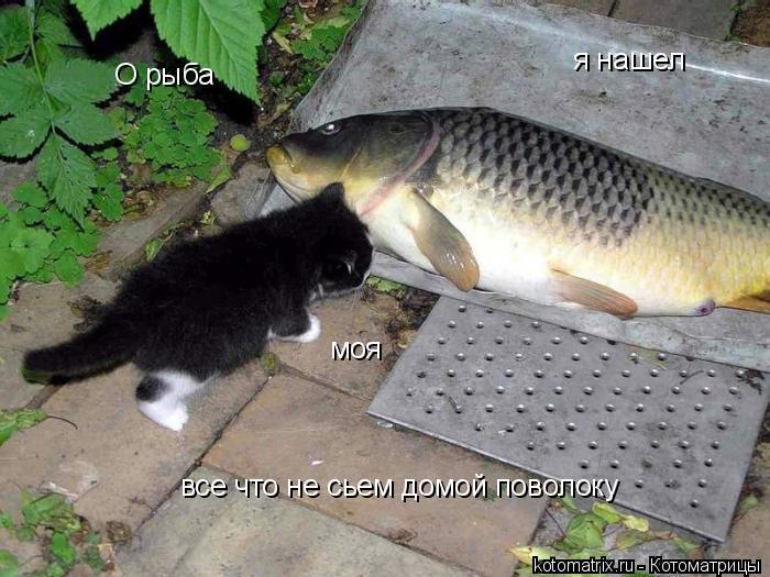 Котоматрица: О рыба я нашел моя  все что не сьем домой поволоку
