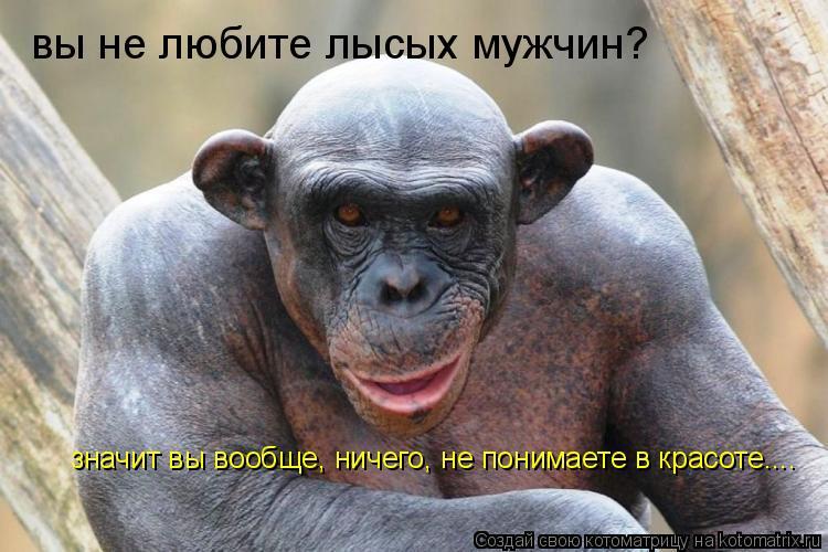 Котоматрица: вы не любите лысых мужчин? значит вы вообще, ничего, не понимаете в красоте....