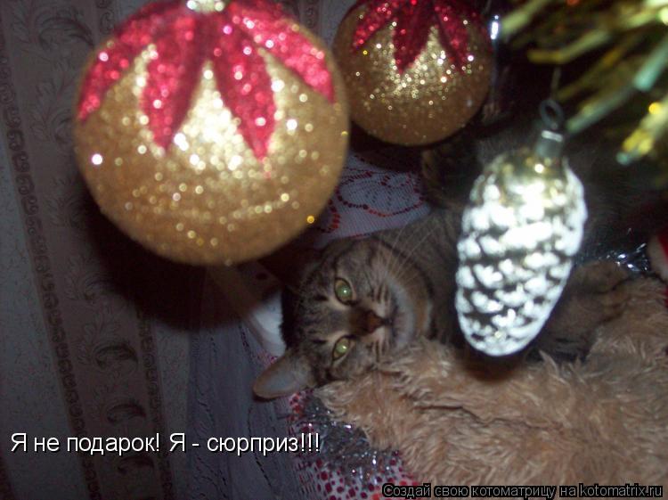Котоматрица: Я не подарок! Я - сюрприз!!!