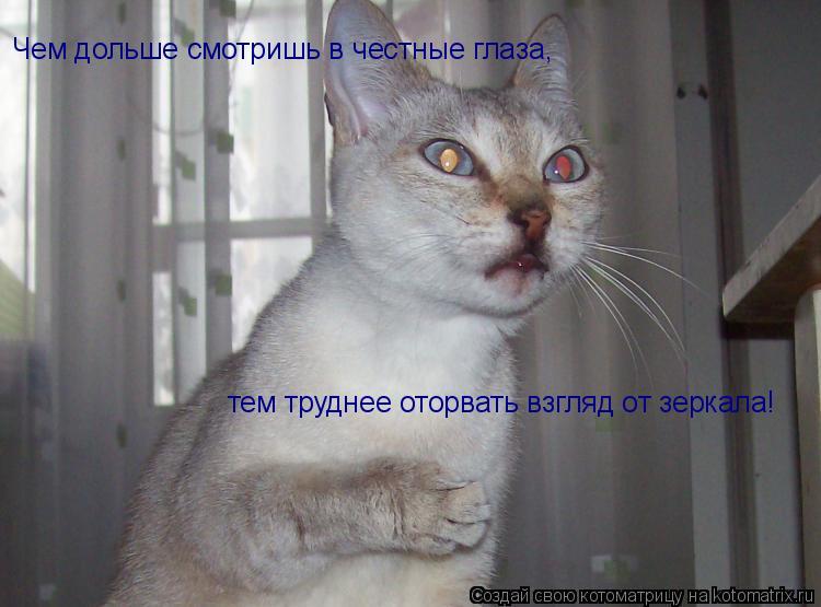 Котоматрица: Чем дольше смотришь в честные глаза, тем труднее оторвать взгляд от зеркала!