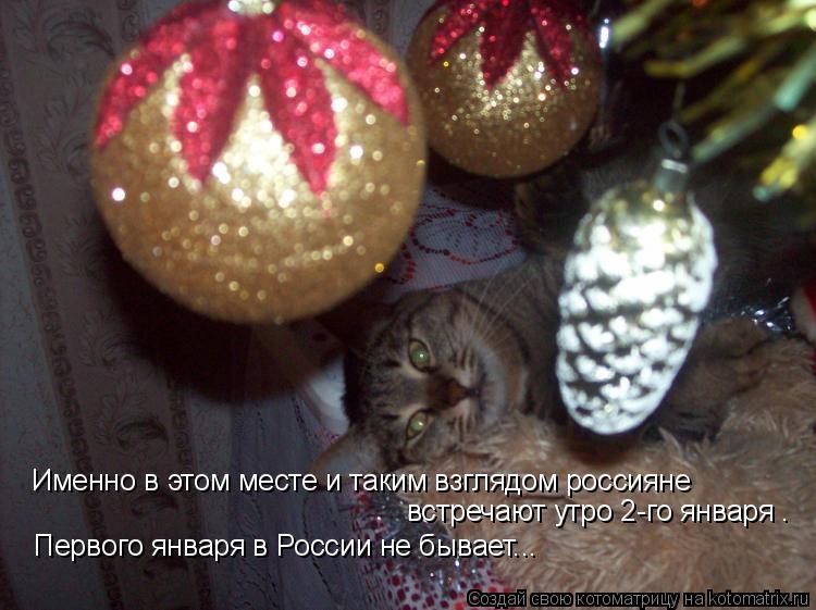 Котоматрица: Именно в этом месте и таким взглядом россияне встречают утро 2-го января . Первого января в России не бывает...