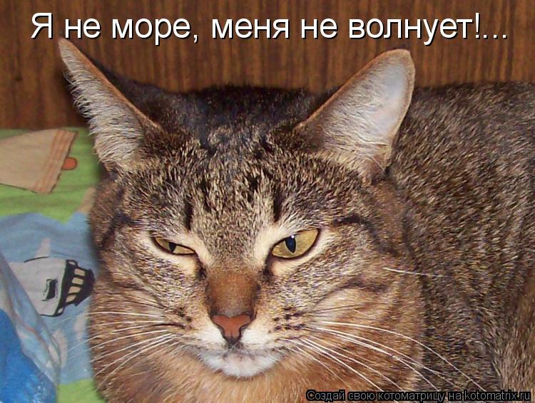 Котоматрица: Я не море, меня не волнует!...