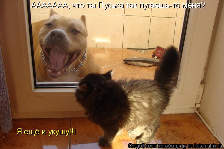 Котоматрица: ААААААА, что ты Пуська так пугаешь-то меня ААААААА, что ты Пуська так пугаешь-то меня? Я ещё и укушу!!!