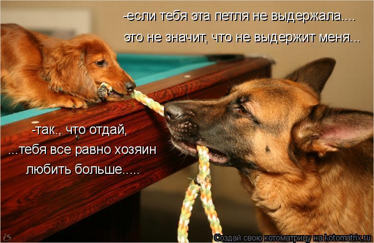 Котоматрица: это не значит, что не выдержит меня... -так., что отдай, ...тебя все равно хозяин любить больше..... -если тебя эта петля не выдержала....