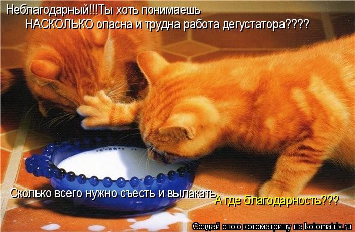 Котоматрица: Неблагодарный!!!Ты хоть понимаешь НАСКОЛЬКО опасна и трудна работа дегустатора???? Сколько всего нужно съесть и вылакать  А где благодарност