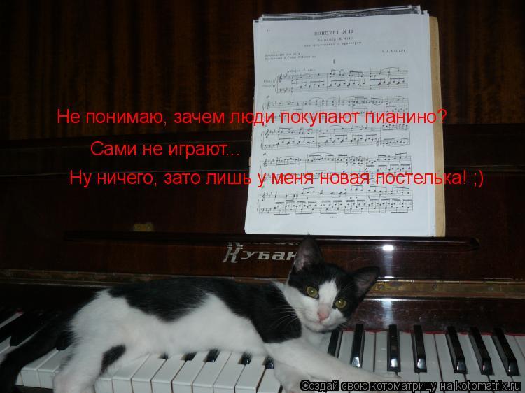 Котоматрица: Не понимаю, зачем люди покупают пианино? Сами не играют... Ну ничего, зато лишь у меня новая постелька! ;)