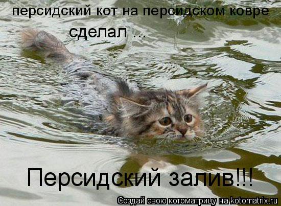 Котоматрица: персидский кот на персидском ковре сделал ...   Персидский залив!!!