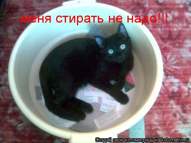 Котоматрица: меня стирать не надо!!!