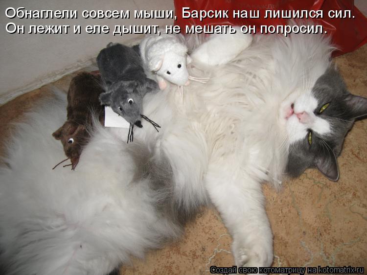 Котоматрица: Обнаглели совсем мыши, Барсик наш лишился сил. Он лежит и еле дышит, не мешать он попросил.